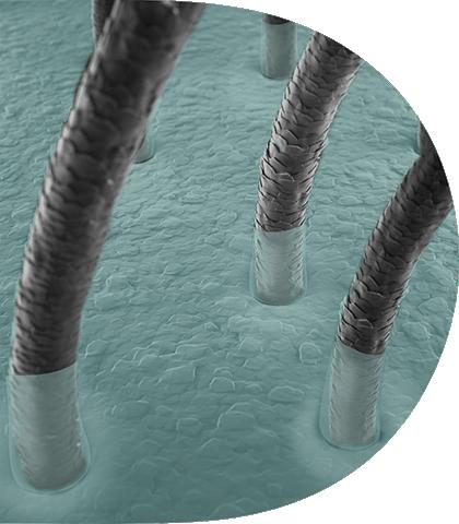 زيادة   في الفطريات و عدم توازن الميكروبيوم