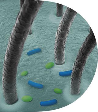 عدم   توازن الميكروبيوم
