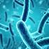 أنواع البكتيريا الأساسية