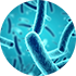 core bacteria species